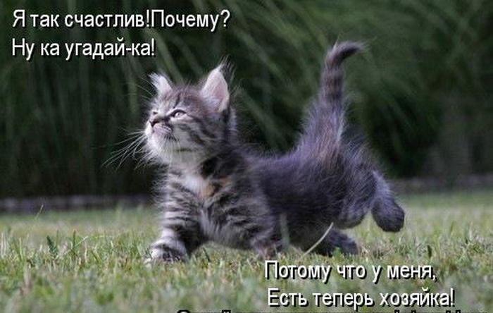 Скачать Игру Про Котенка - фото 2