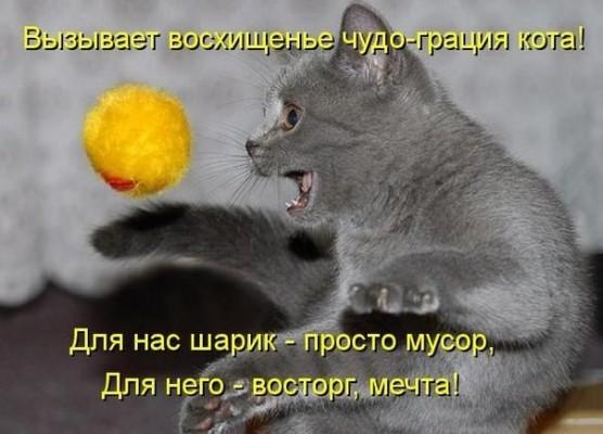 стишок чудо грация кота