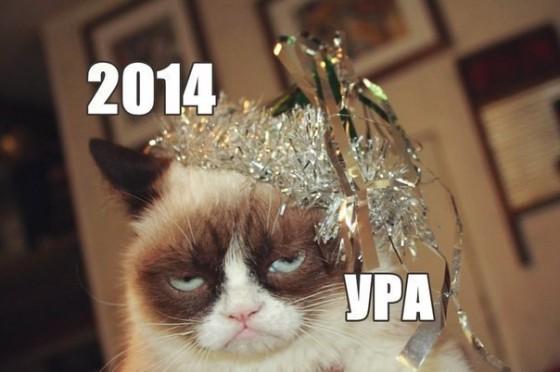 grumpy cat празднует новый год