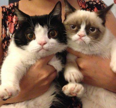 grumpy brother брат сердитого кота