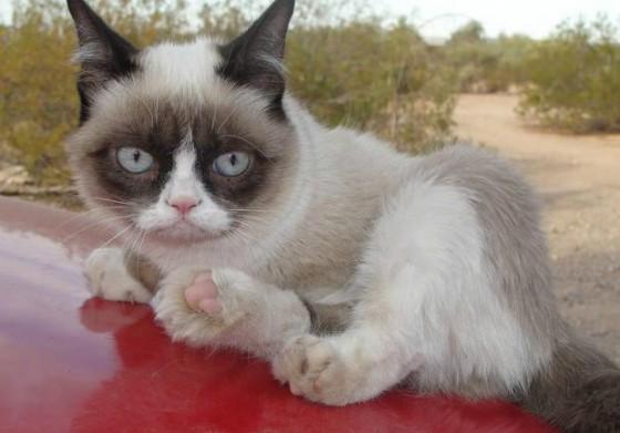 сердитый кот грумпи кэт