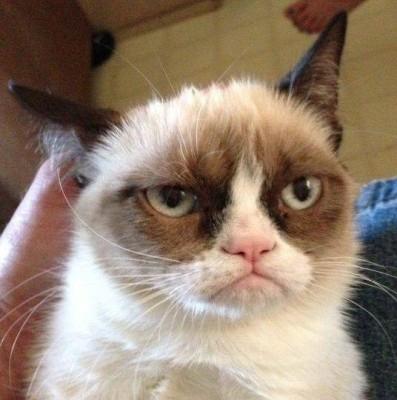 grumpy cat морда