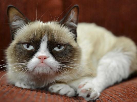 grumpy cat Tardtar Sauce