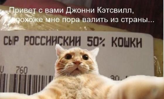 Кэтсвилл сыр российский из кошки