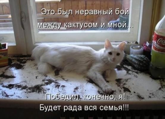 стих кот опрокинул кактус