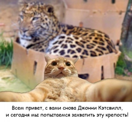 джонни кэтсвилл фоткается на фоне тигров