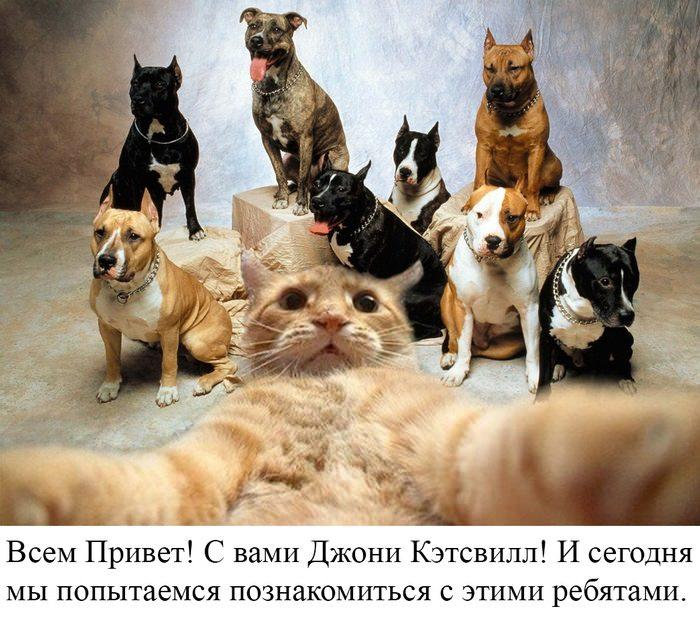 Кот на фоне собак селфи