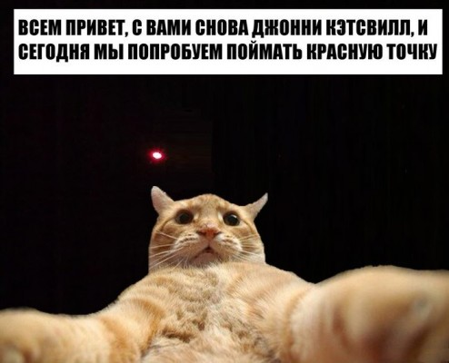 кот джонни кэтсвилл ловит красную точку