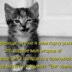 котенок корчит рожи стих