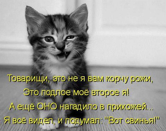 Стих про кошку и еду