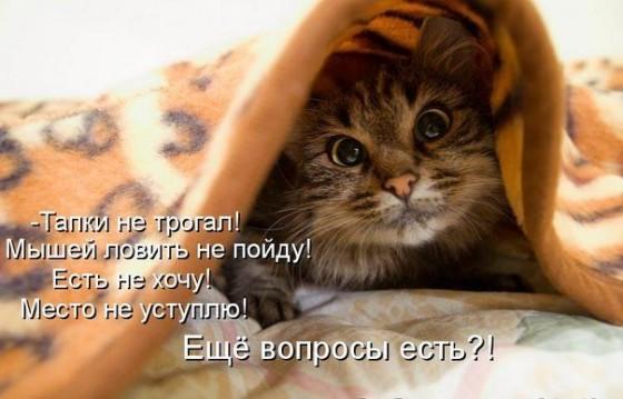 Кот под одеялом - вопросы есть?