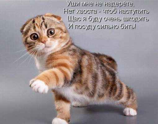 стих с котом без ушей и хвоста