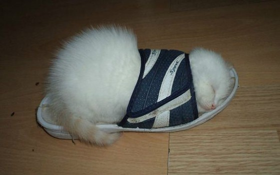 кот в сланце