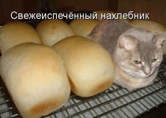 кот булка