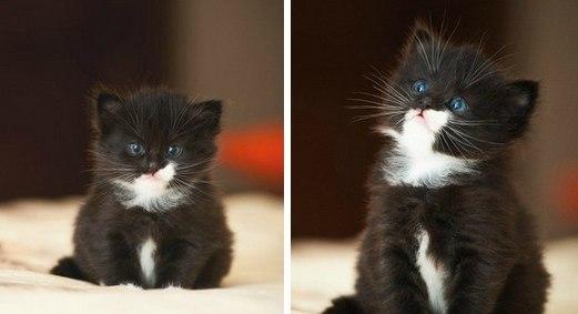 котенок малыш черныш