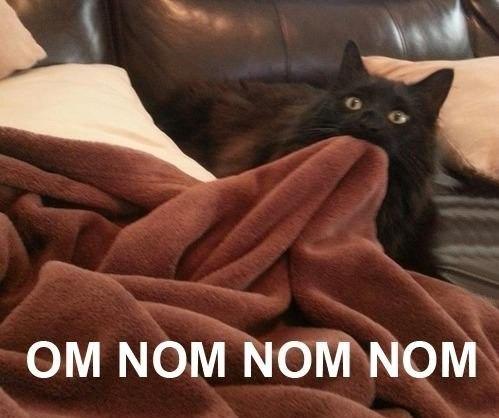 кот жует одеяло омномном
