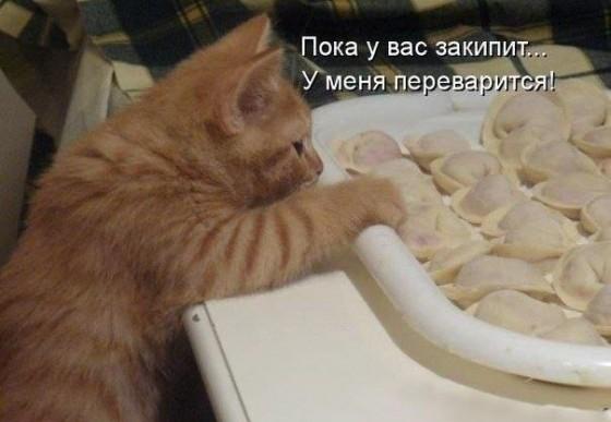 кот лезет за пельменями