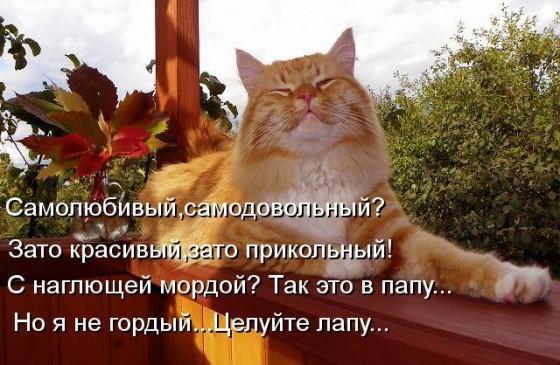 самодовольный наглый рыжий кот