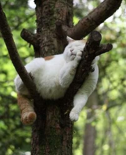 кот спит на дереве