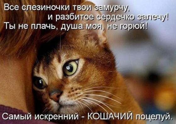 стихотворение про кошачий поцелуй