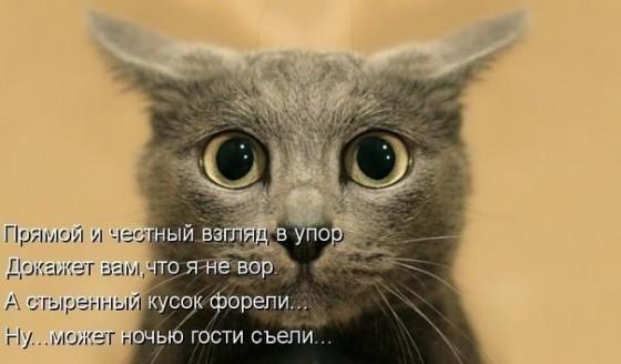 стих про взгяд в упор кота