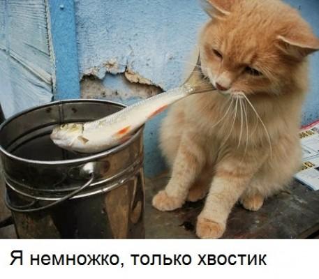 кот тащит рыбу