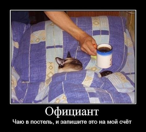 коту чай в постель