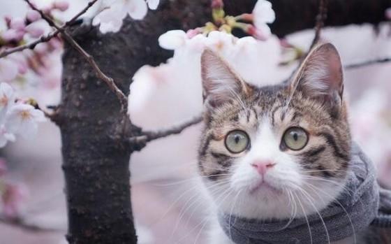 кошка в цветах весной