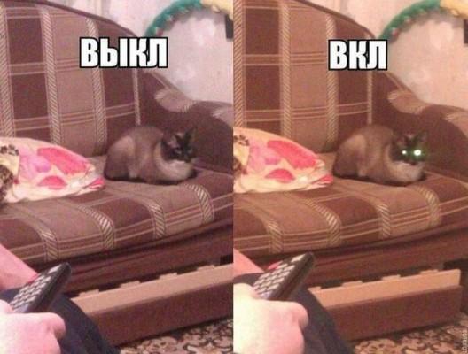 кот с горящими глазами