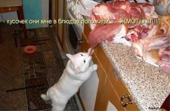 Кот тащит большой кусок мяса
