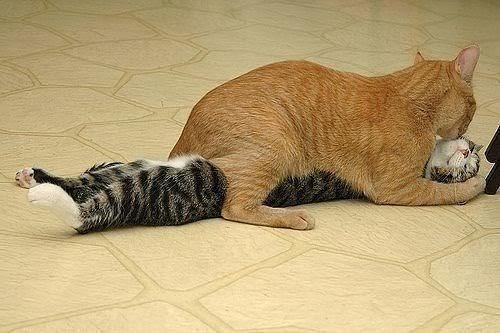 когда спят котики