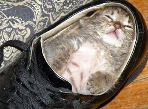 Если вам снится, что ваша обувь очень неудобная, то опасайтесь худшего.