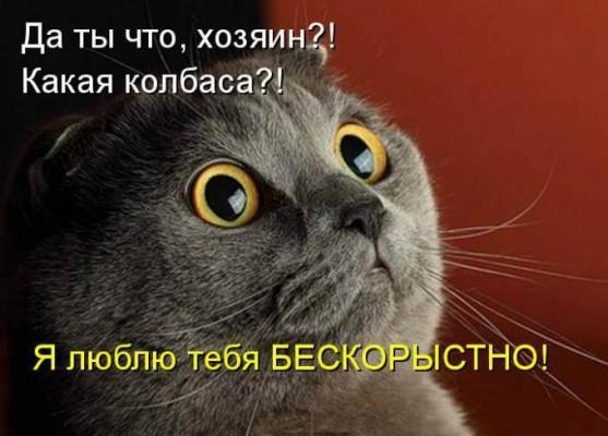 кот любит хозяина бескорыстно