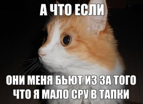 кот - я мало сру в тапки