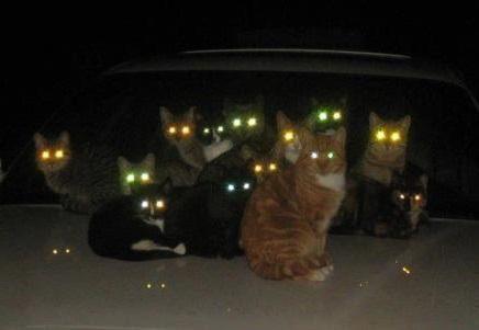 много кошек святят глазами