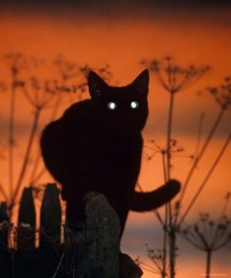 силуэт кота ночью на заборе
