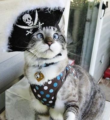 Спанглс кот пират