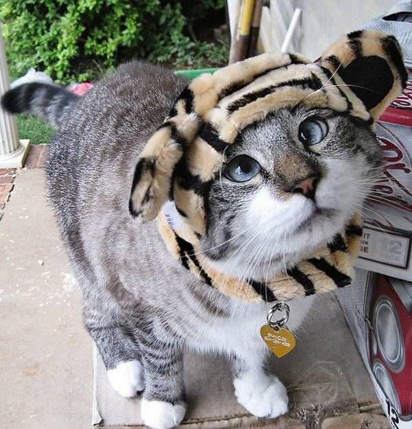 Кот обожает пирата пират обожает кота