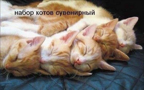 набор котов сувенирный