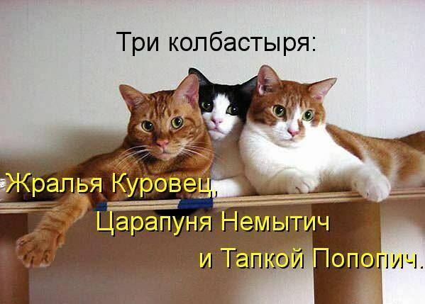 картинки коты с надписями