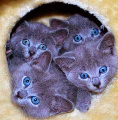 Картинки милых котят 30 фото  FunKot