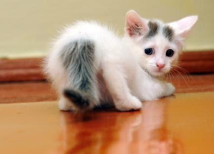 Фото милых котят с цветами 93