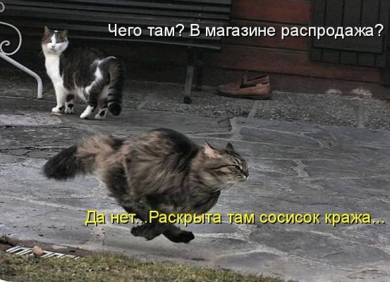 бегущий кот