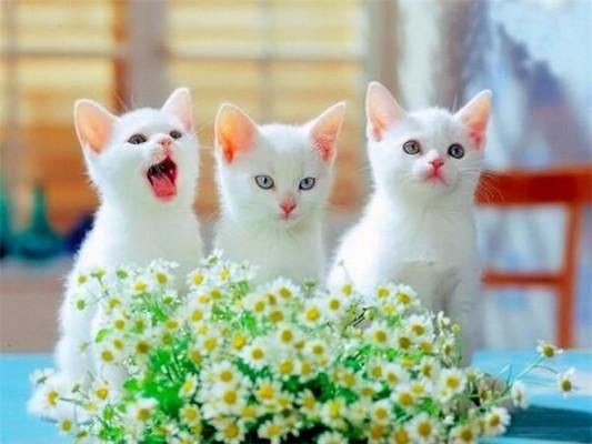 белые милые  котята с цветочками