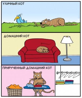 прирученный домашний кот