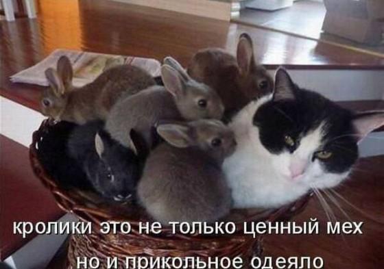 кошка с кроликами