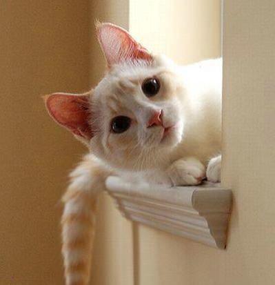 кот на подоконнике выглядывает