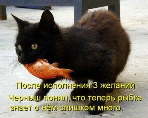 Кот с золотой рыбкой