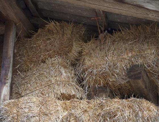 Найди кота в сене
