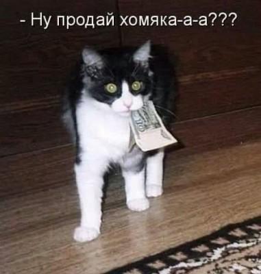 котенок с деньгами